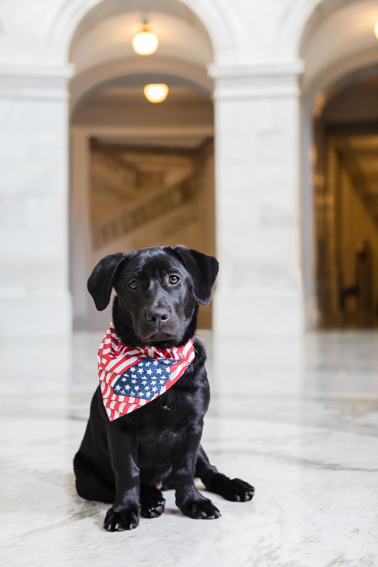 Seneca | Office Dogs of Capitol Hill