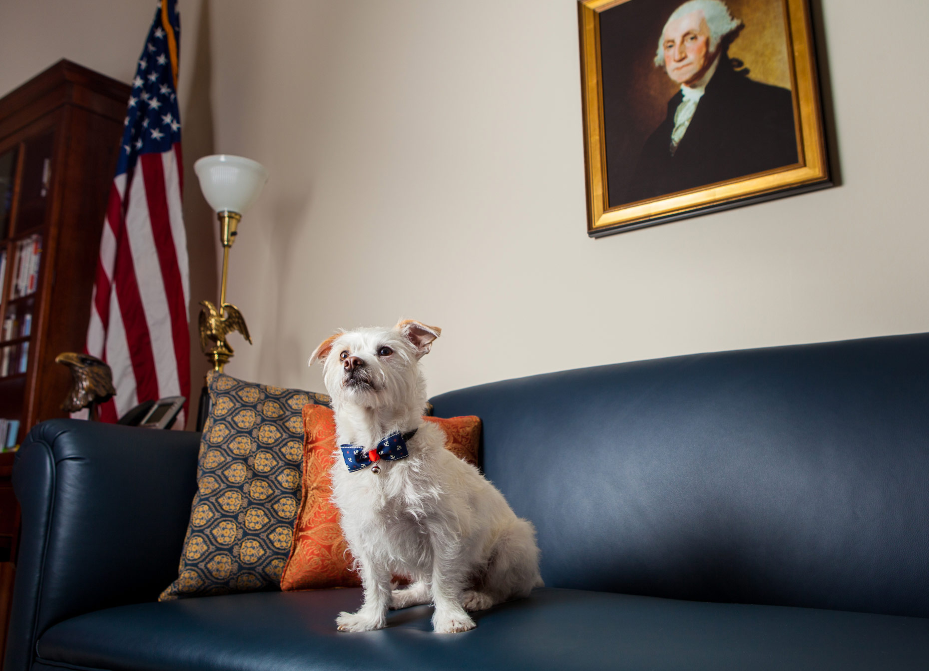 Office Dogs of Capitol Hill: Wally the Terrier mix