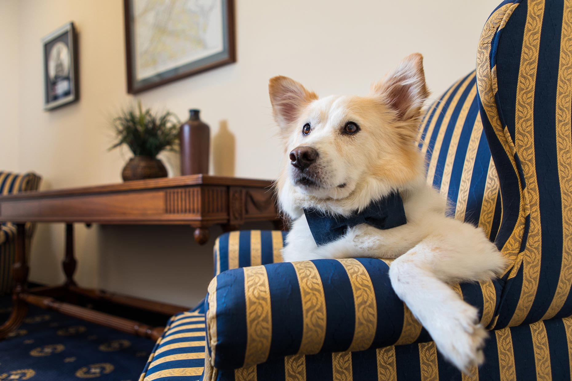 Scobey | Office Dogs of Capitol Hill