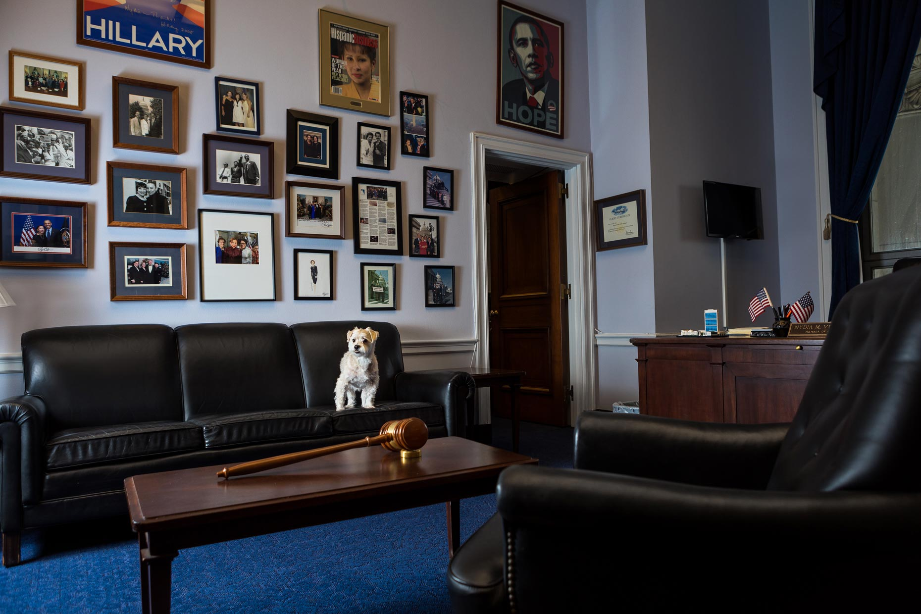 Cricket | Office Dogs of Capitol Hill