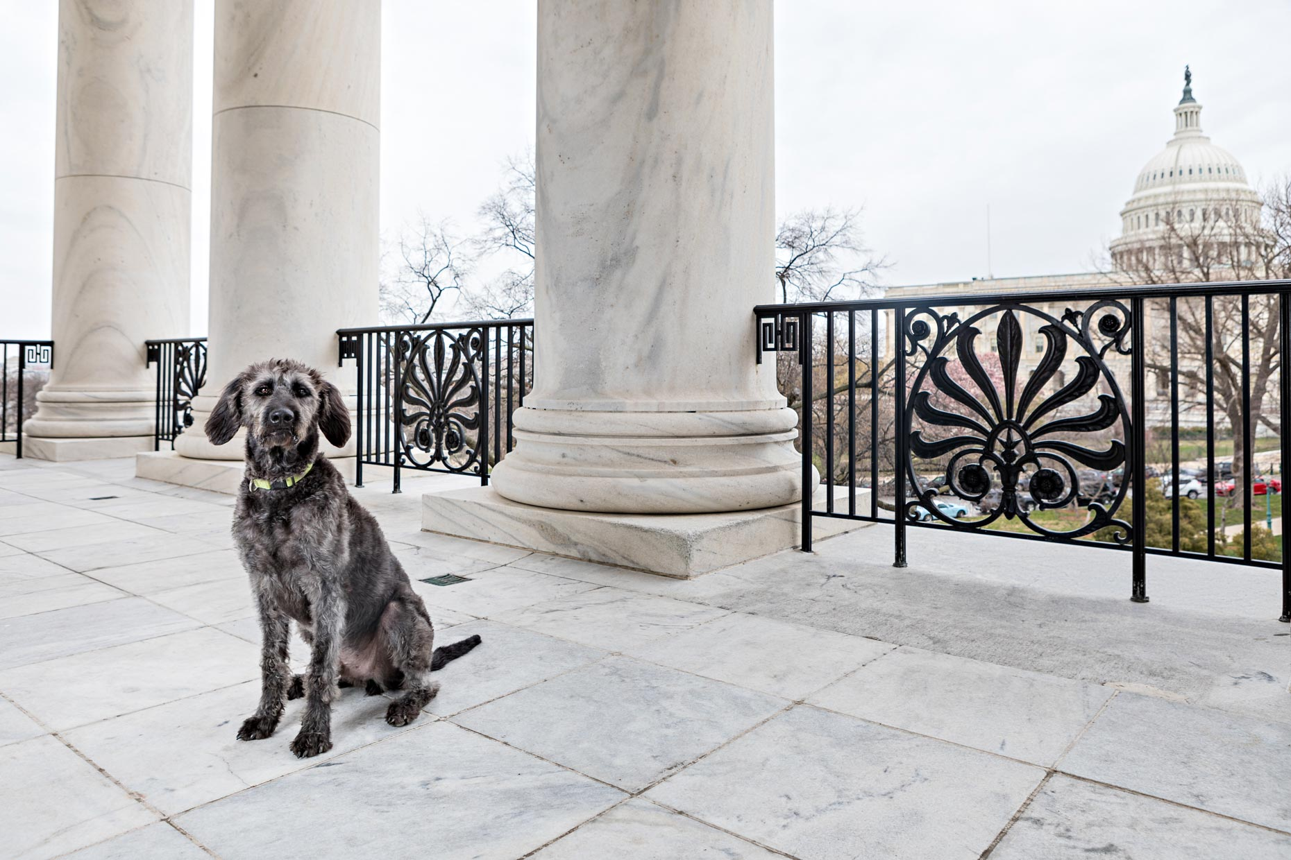 Sully | Office Dogs of Capitol Hill