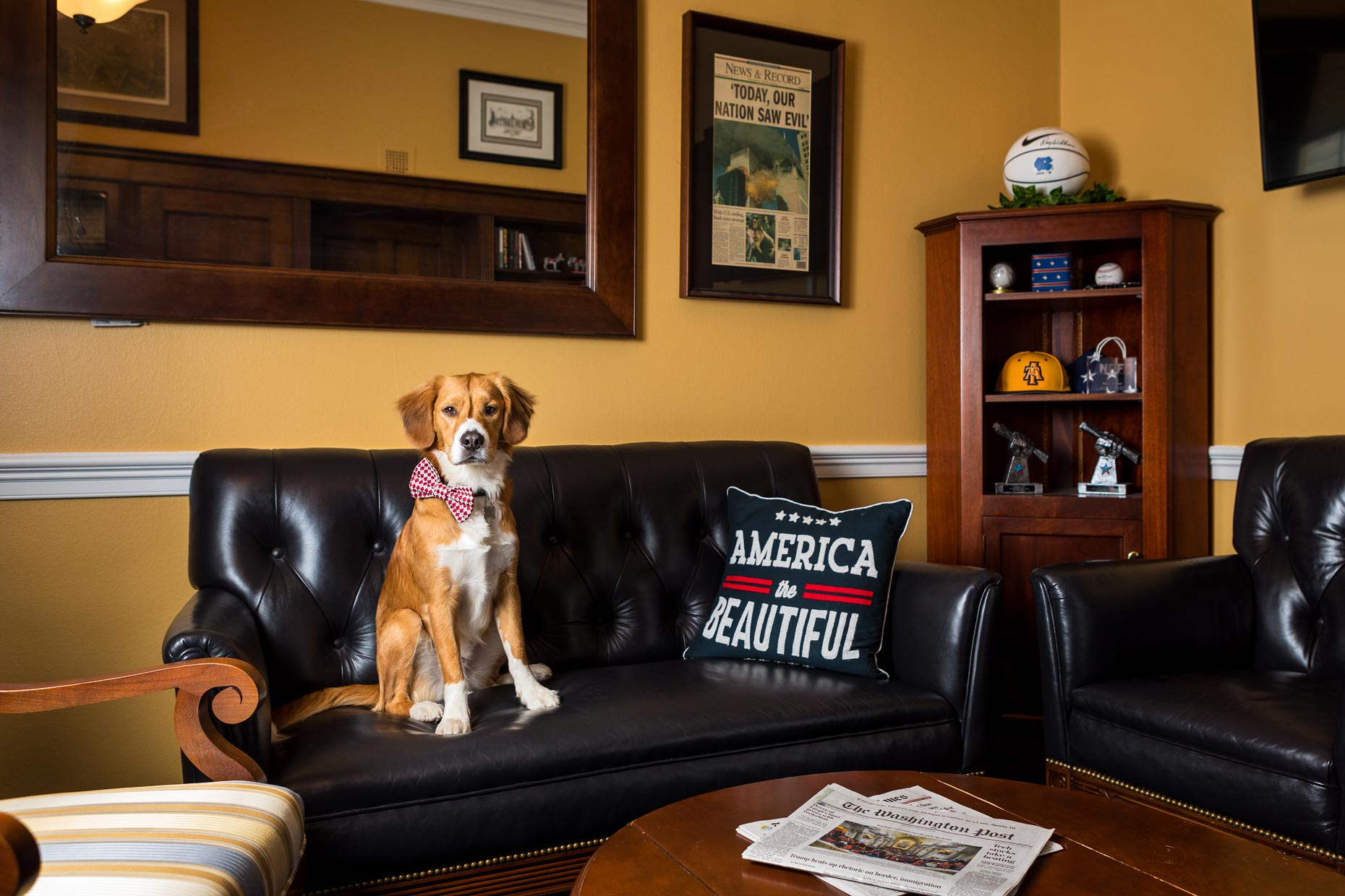 Bojangles | Office Dogs of Capitol Hill