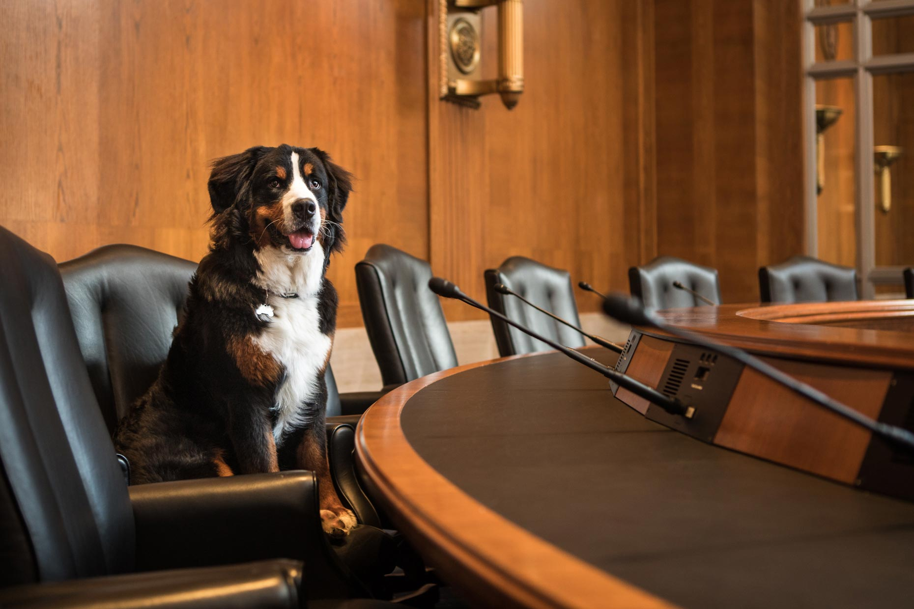 Hugo | Office Dogs of Capitol Hill