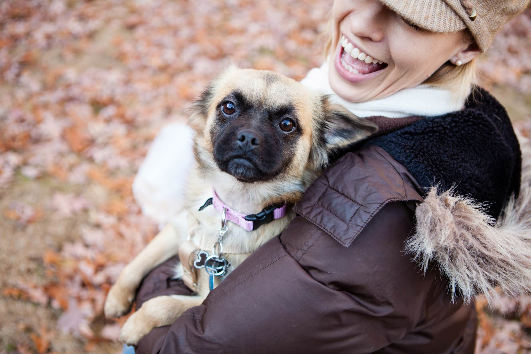 Lifestyle Dog Photographer - Washington DC, VA, MD |  City Dogs Rescue | Hannele Lahti