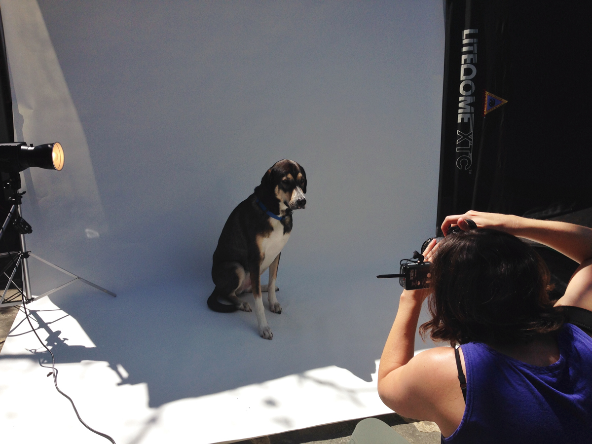 BTS│Lifestyle Dog Photographer│ Hannele Lahti│ Washington DC, VA