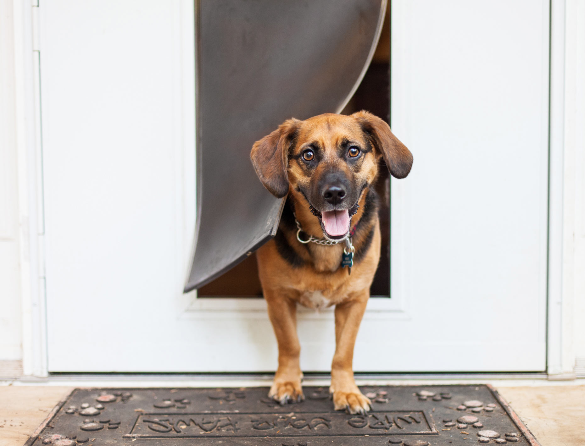 Doggie Door | Lifestyle + Documentary Dog Photographer | Hannele Lahti | Virginia