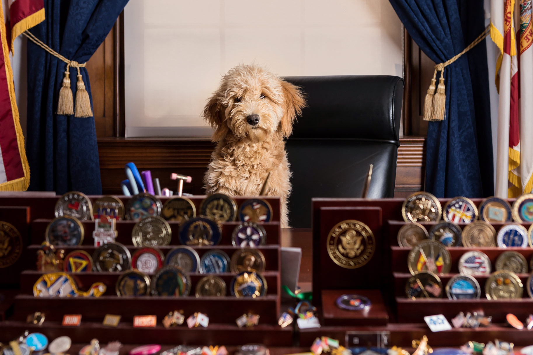 Office Dogs of Capitol Hill | Carmela, the Goldendoodle | DC Dog Photographer