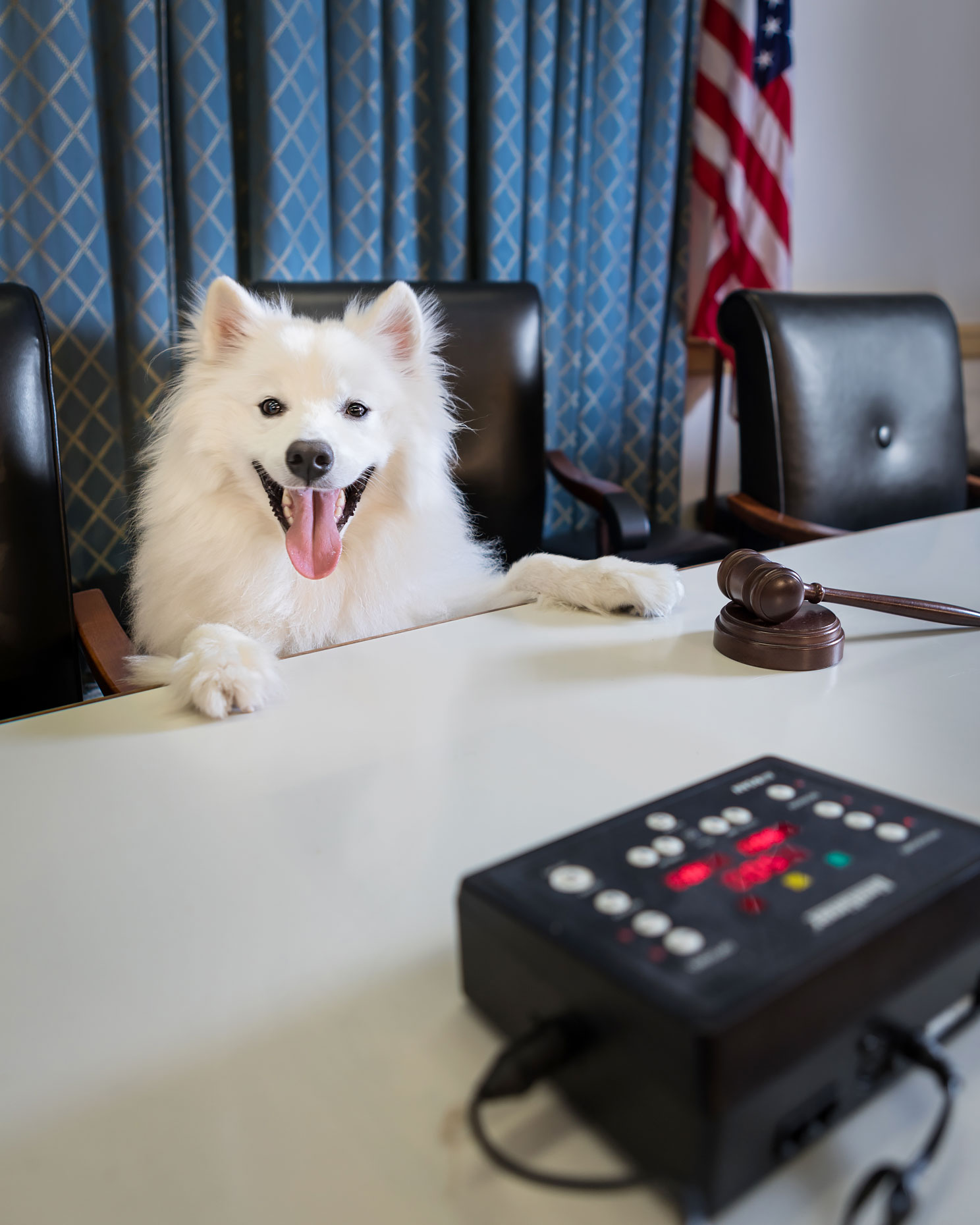 Office Dogs of Capitol Hill: Koji the American Eskimo