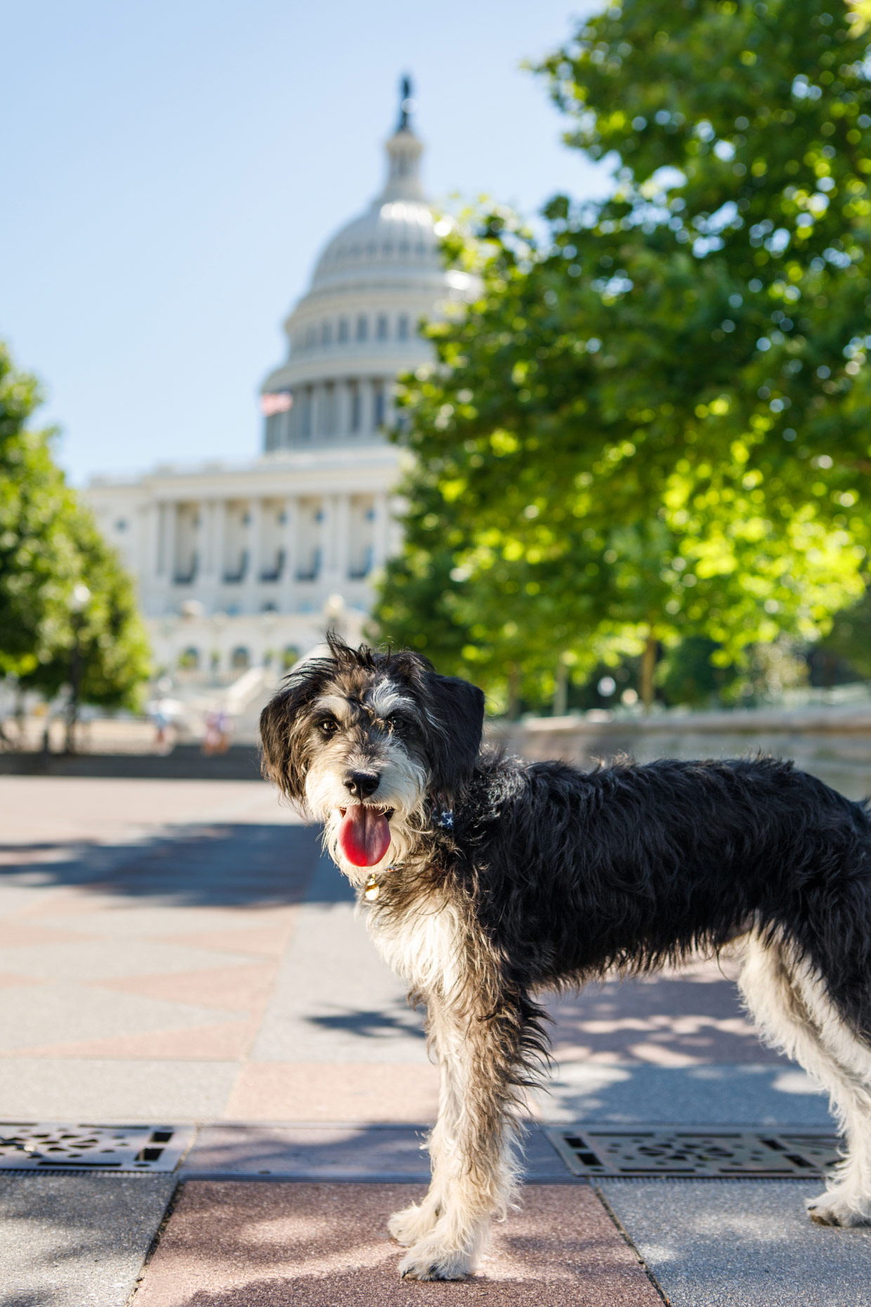 Office Dogs of Capitol Hill:  Lester Obama, rescued puppy
