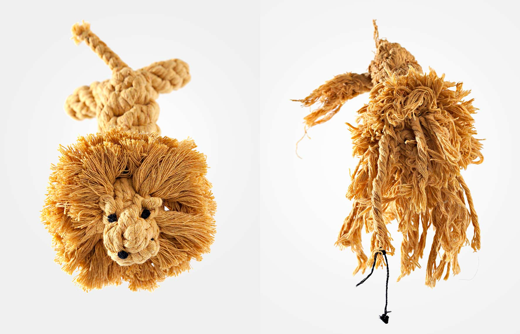 The Rope Lion :: Commercial + Documentary Dog Photographer - Washington DC, VA, MD