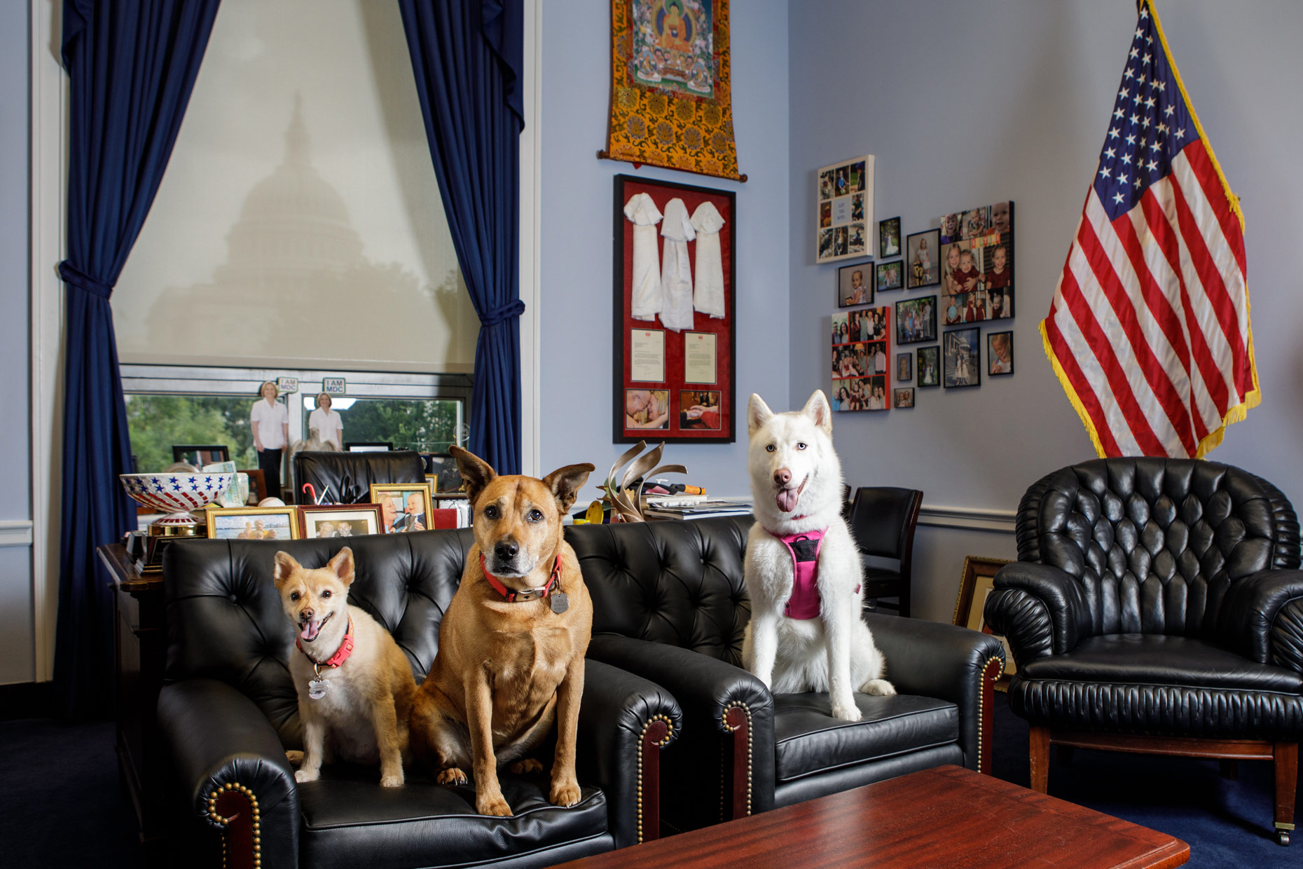 Office Dogs of Capitol Hill: Tessa, Maya and Luna
