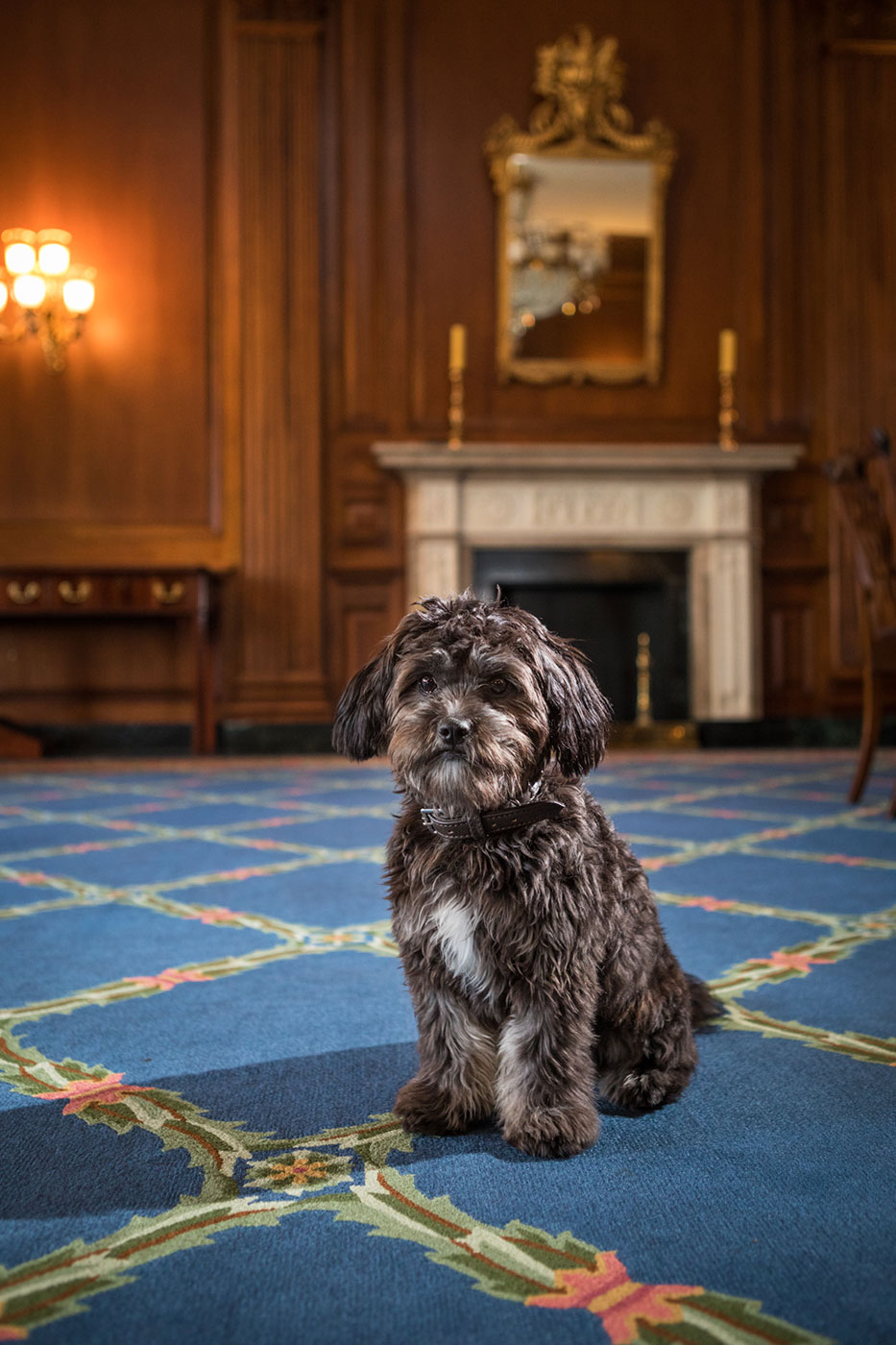 Office Dogs of Capitol Hill: Millie the terrier mix