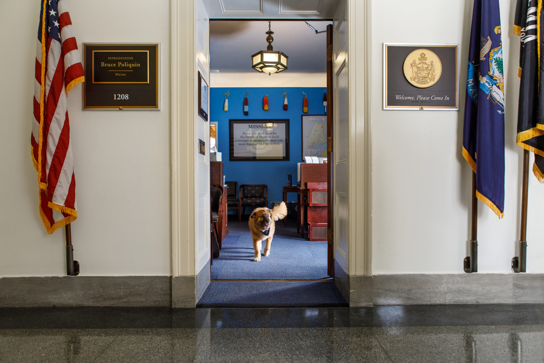 Office Dogs of Capitol Hill: Minnie the Shepherd mix