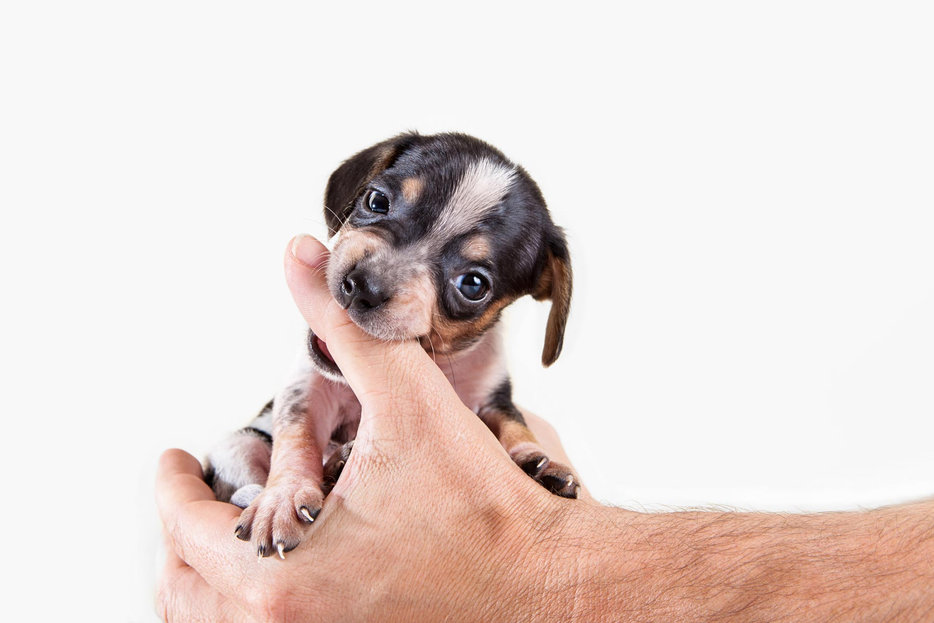 Puppy Eats Hands | Commercial + Lifestyle Dog Photographer | Hannele Lahti