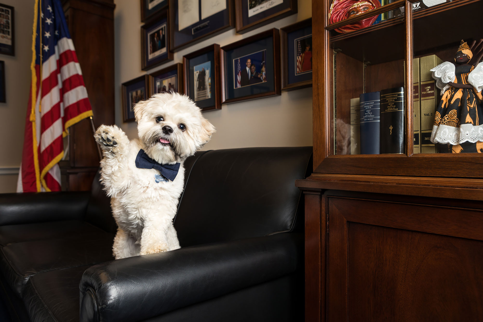 Office Dogs of Capitol Hill: Ted the Shihpoo