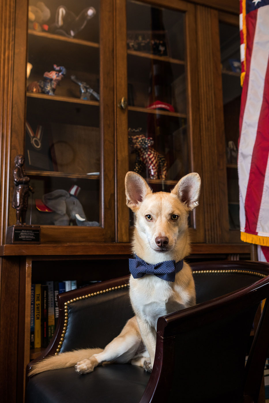 Office Dogs of Capitol Hill: Todd the shelter dog from Georgia