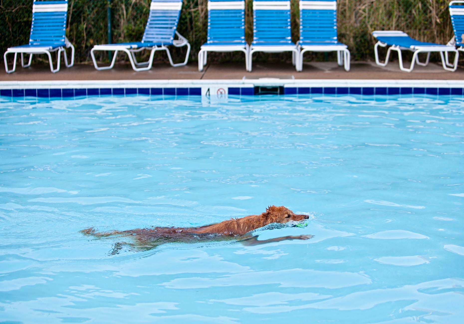 Pool Dog in Virginia | Commercial + Lifestyle Dog Photographer | Hannele Lahti