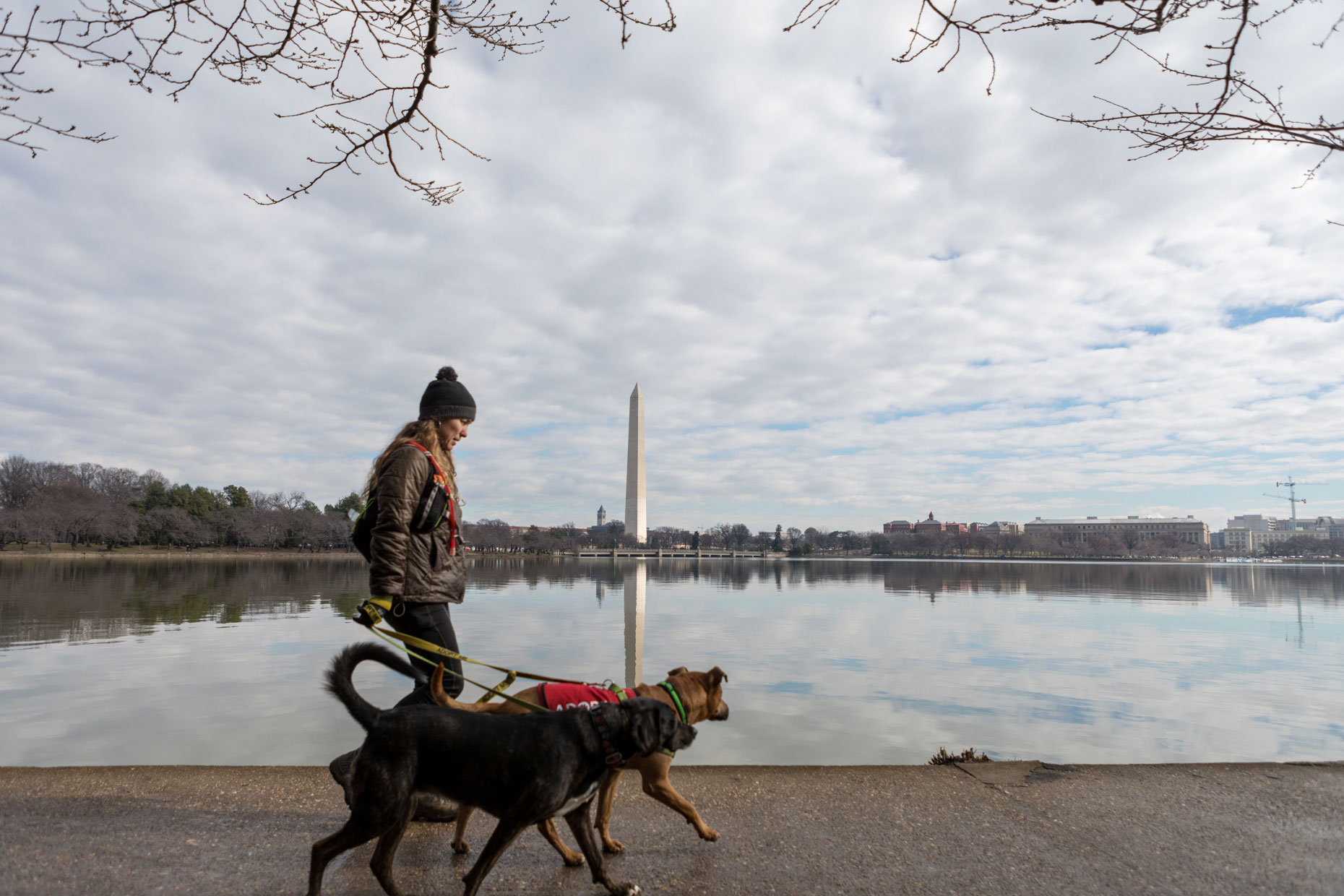Hiking with Dogs in DC | Lifestyle + Documentary Dog Photographer | Hannele Lahti