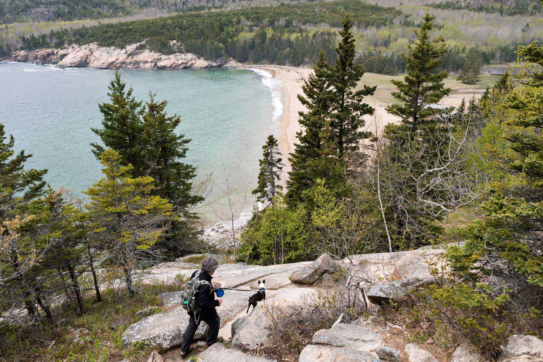 Hiking with Dogs | Washington DC Lifestyle Dog Photographer | Acadia National Park